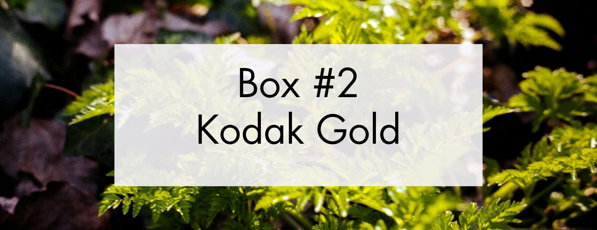 Box Film Mystère 2 – Kodak Gold