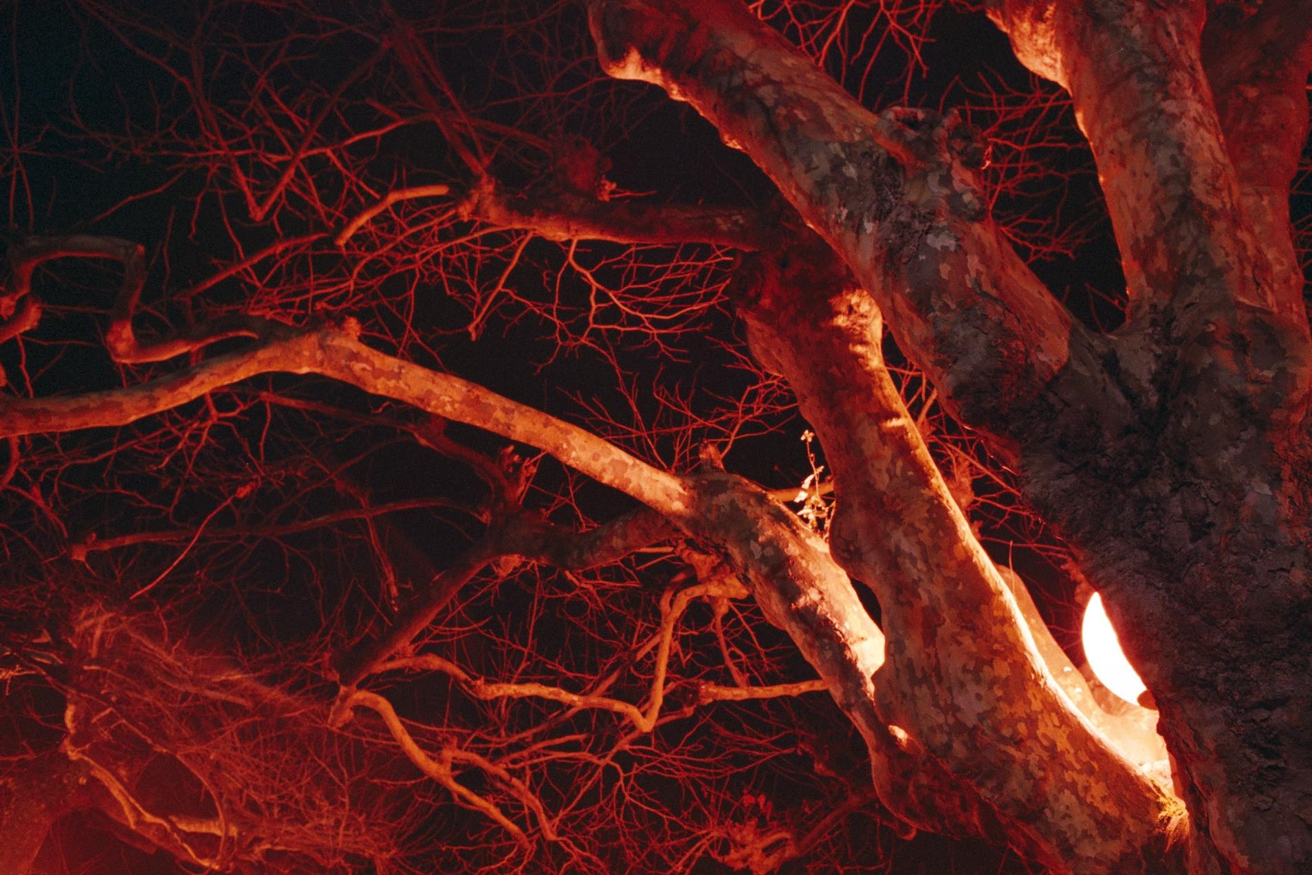 Pascal – fuji pro 400h nocturne et hiver