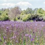 20190512-Festival-Jardin-Chaumont-sur-Loire_20190512_fuji_superia400_35_1600px-8.jpg