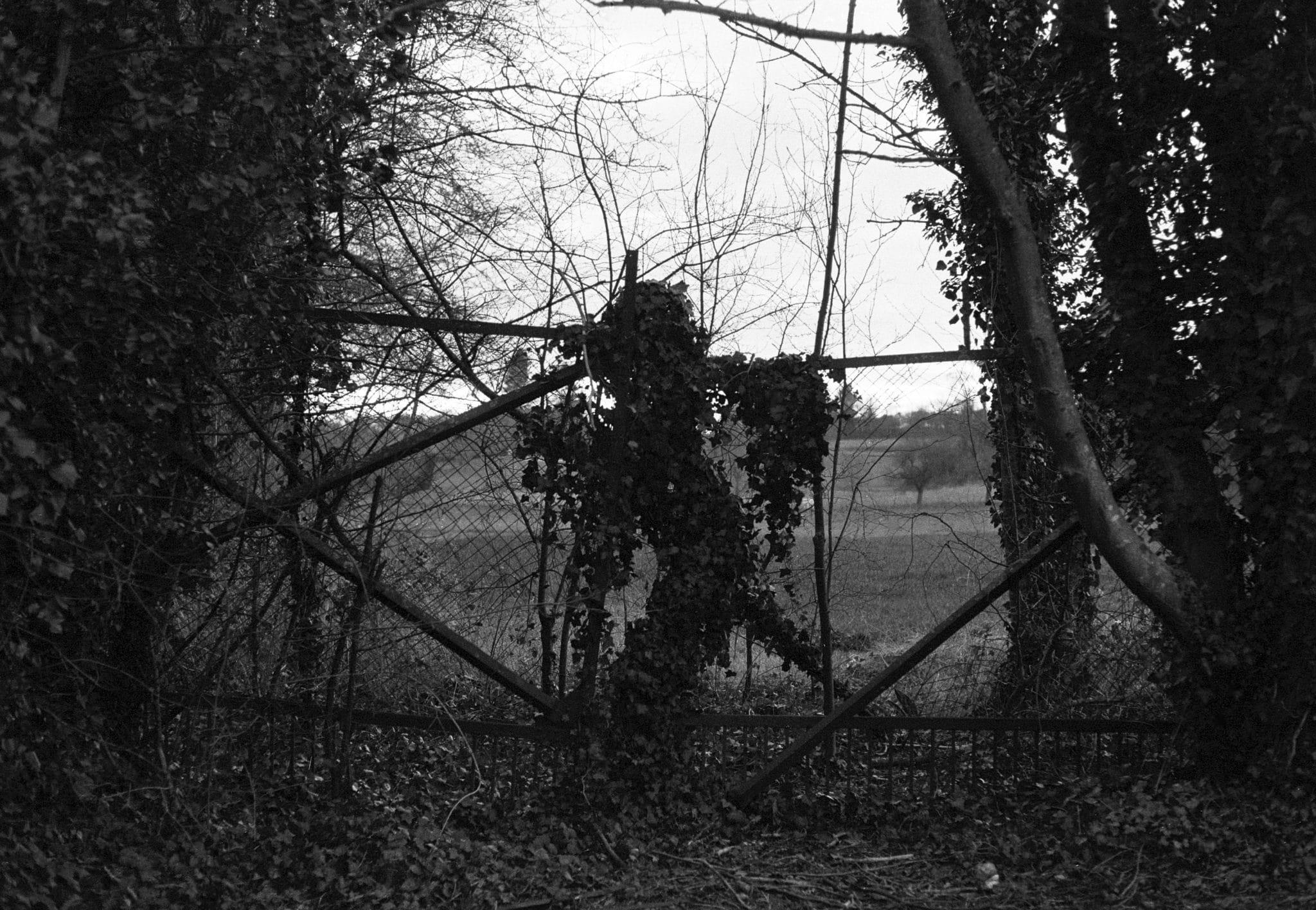 Contre-jours et promenade (kentmere 400 + Leica r4/ Summicron 50mm)