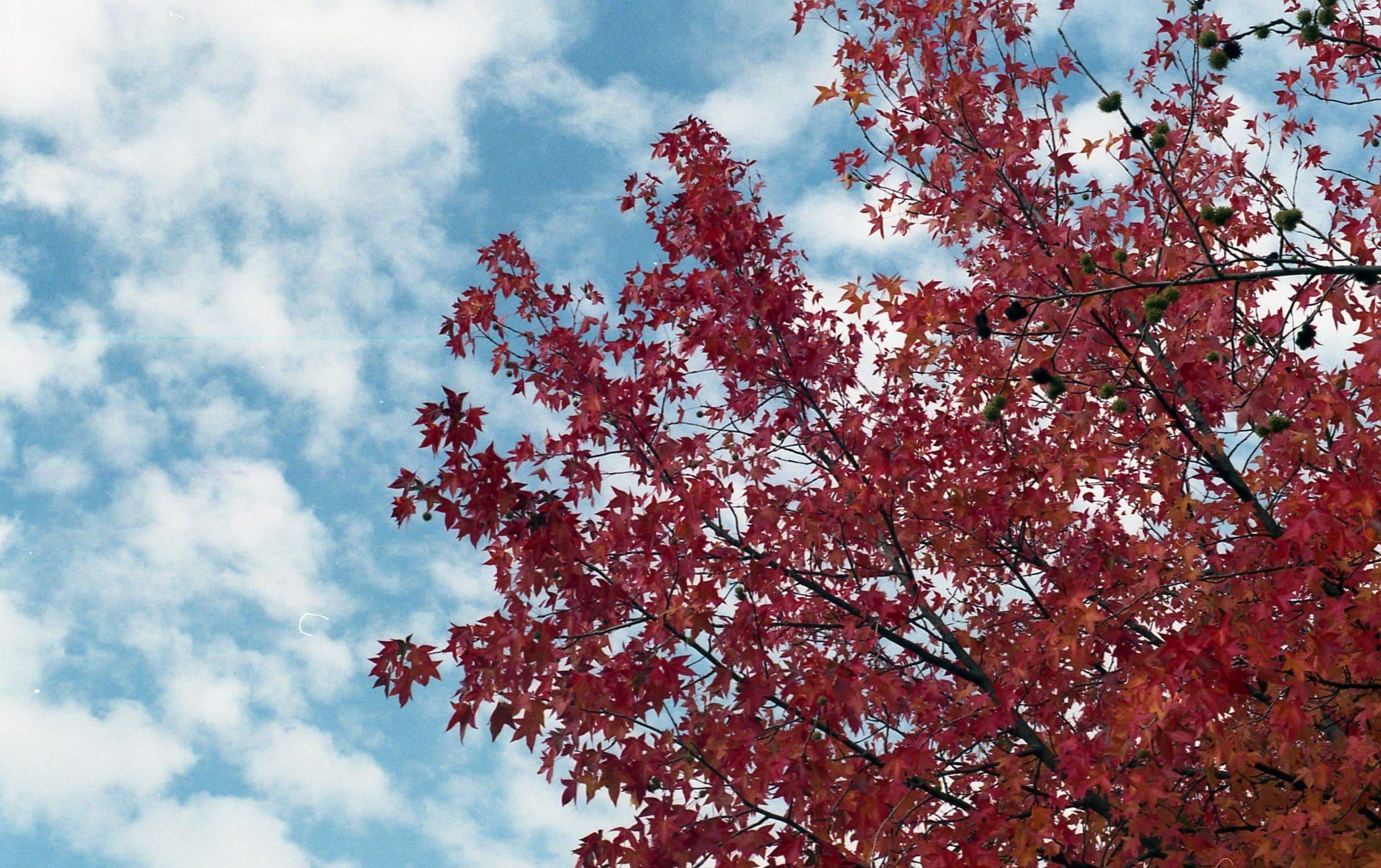 Défi Octobre Rouge – Une ballade automnale