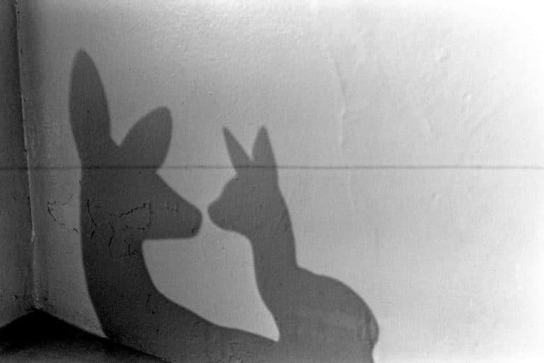 De Weston aux jeux d'ombre