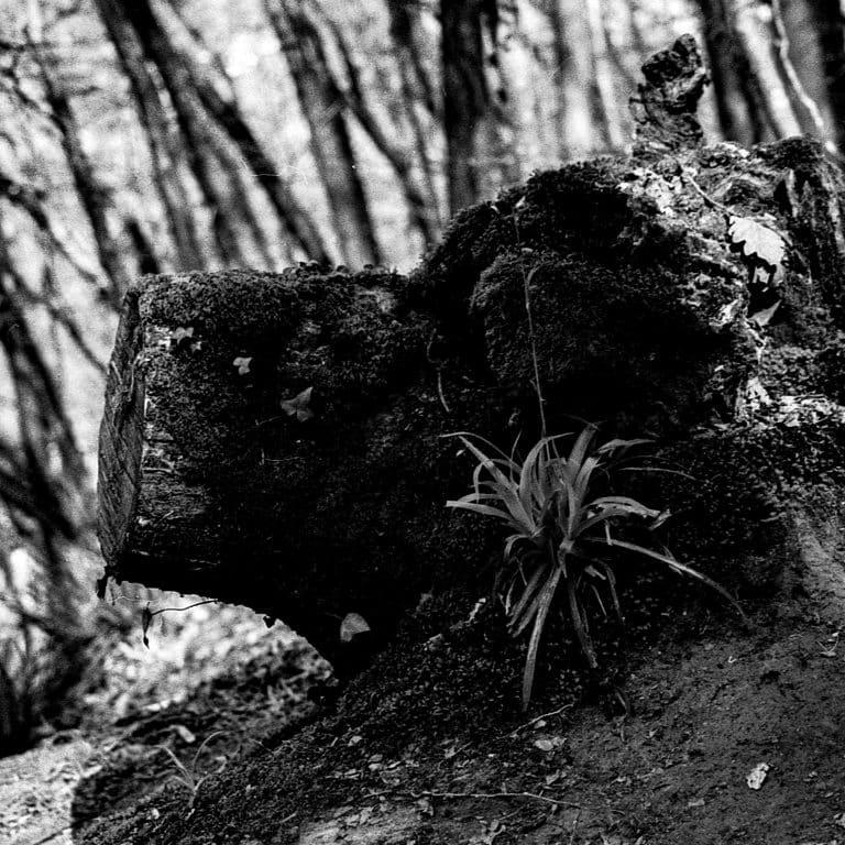 Monstres de la forêt et banalités